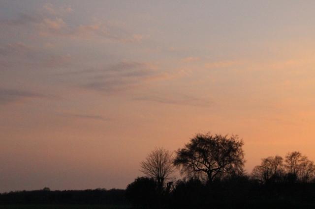 Baumsilhouette im Sonnenuntergangsrot.