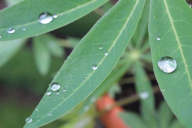 Dunkelgrüne, samtige Farnspitzen, darauf Perlen aus Wassertropen.