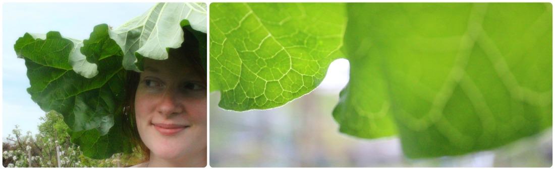 Ein großes Rhabarberblatt als Hut auf meinem Kopf, in einem Garten, aber es ist nur ein Teil meines Kopf abgebildet. Daneben ein Bild von dem Rhabarberblatt und seinem Rand aus meiner Prespektive.