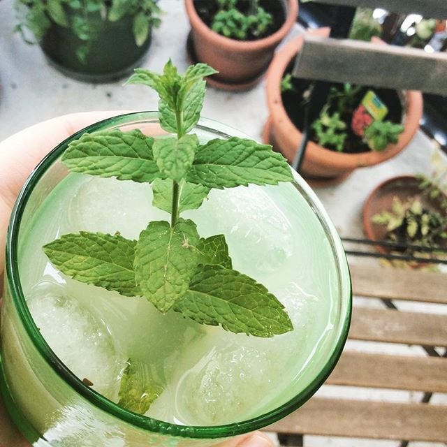 Refreshing_cucumber_lemonade_following_a_recipe_by__pantsukudasai____12von12